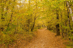 The path is in the autumn forest. Stock Images