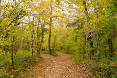 The path is in the autumn forest. Royalty Free Stock Photo