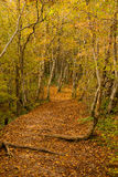 The path is in the autumn forest. Royalty Free Stock Images