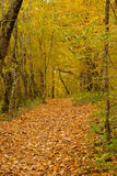 The path is in the autumn forest. Stock Image