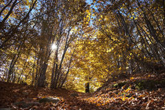 Path in an Autumn Forest Stock Photos