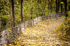 Path in autumn forest. Path in autumn maple forest Royalty Free Stock Photos