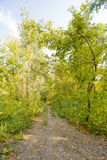 Path in the Autumn Forest. Autumn forest path between maple and poplar trees in a sunny day Stock Image