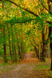 A path in autumn forest Royalty Free Stock Images
