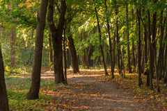 A path in autumn forest Royalty Free Stock Photography