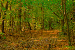 A path in autumn forest Royalty Free Stock Photo