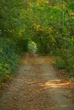A path in autumn forest Stock Image