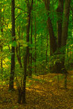 A path in autumn forest Stock Photography