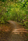 A path in autumn forest Stock Images