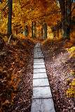 Path in the autumn forest Royalty Free Stock Photo