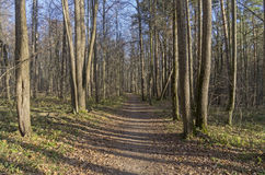The path in the autumn forest. Stock Photography