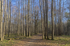 The path in the autumn forest. Royalty Free Stock Photo