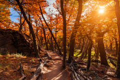 Path in the autumn forest. Patagonia, Argentina Royalty Free Stock Photography