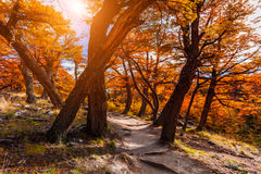 Path in the autumn forest. Patagonia, Argentina Stock Photography