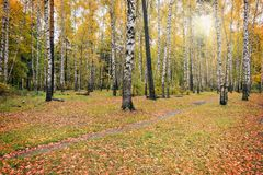 Path in the autumn forest. Stock Photography