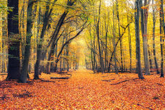 Path in autumn forest Royalty Free Stock Photography