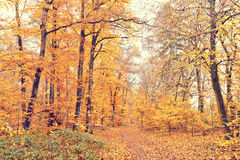 Path in autumn forest. Pathway in the autumn forest Stock Photo