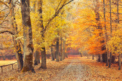 Path in autumn forest. Pathway in the autumn forest Royalty Free Stock Photography