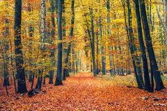Path in autumn forest. Pathway in the autumn forest Stock Photography