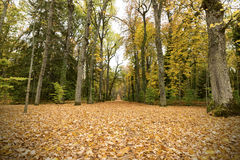Path in the autumn forest. On a rainy day Royalty Free Stock Photography