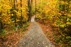 Path Through an Autumn Forest Stock Photography