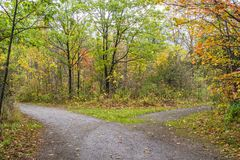Path through an autumn forest splitting in two directions. Vibrant fall colors Royalty Free Stock Photo