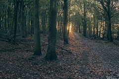 Path in autumn forest with sunbeam. Royalty Free Stock Photo