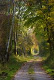 Path Through Autumn Forest Royalty Free Stock Photography