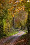 Path Through Autumn Forest Royalty Free Stock Images
