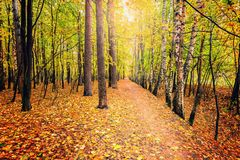 Path in the autumn forest. Stock Images