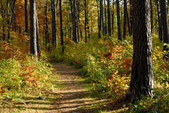 Path in autumn forest. During sunny weather Stock Photos