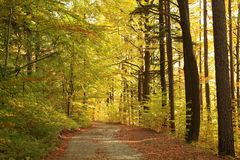 Path through autumn forest at sunset royalty free stock image