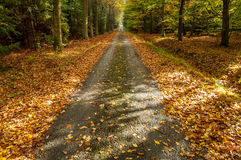 A Path in Autumn Forest. View of autumn forest with a path and leaves on the ground Stock Image
