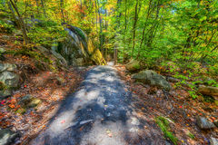 Path in an Autumn Forest Stock Photo