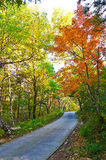 The path and autumn forest of Zu mountain Stock Photos