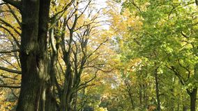Path in autumn leaves stock video