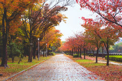 Path in autumn. Path with autumn leaves and tree in Osaka Castle, Japan stock image