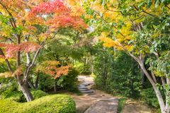 A path through the autumn maple foliage. A Path in between colorful trees in autumn at Koko-en Garden in Himeji, an Edo Style Japanese Garden located next to royalty free stock photography