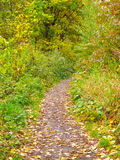 Path in the autumn nature Stock Photos