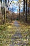 Path in autumn park. Stock Photos
