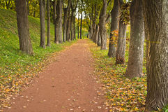 Path in autumn park Royalty Free Stock Photos