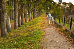 Path in autumn park. Close up Royalty Free Stock Images