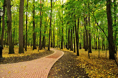 Path in the autumn park Royalty Free Stock Photo