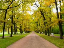 Path in the autumn Park going forward. Stock Images