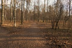 Park. Path in the autumn park Royalty Free Stock Photo