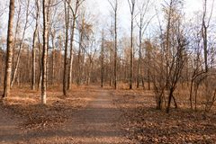 Park. Path in the autumn park Royalty Free Stock Photography