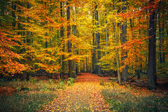 Path in autumn park Royalty Free Stock Photography