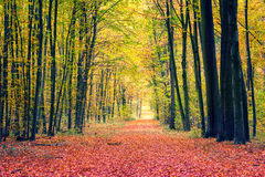 Path in autumn park Royalty Free Stock Photos
