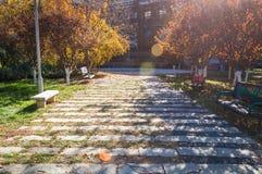 Path in autumn Stock Image