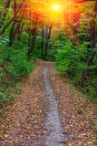Path in autumn park Royalty Free Stock Image